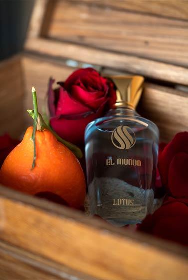 lutos - عطر ادکلن برند الموندو