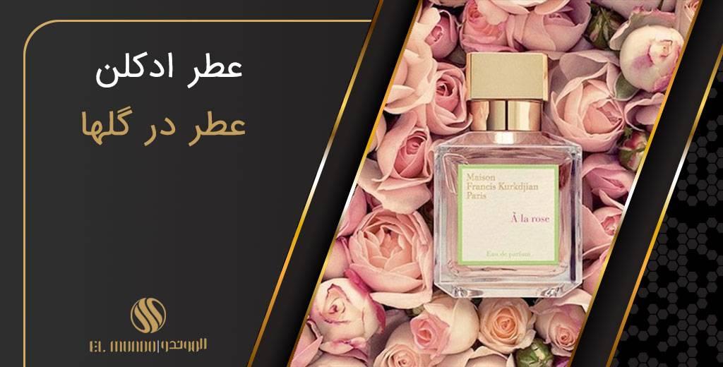 perfume flower - مجله عطر ادکلن الموندو